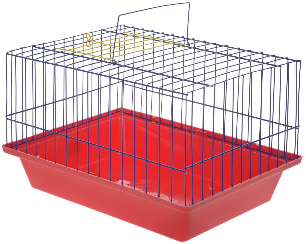 Клетка для морской свинки ЗооМарк, цвет: красный поддон, синяя решетка, 41 х 30 х 25 см клетка для шиншилл и хорьков зоомарк цвет синий поддон синяя решетка 59 х 41 х 79 см 725дк