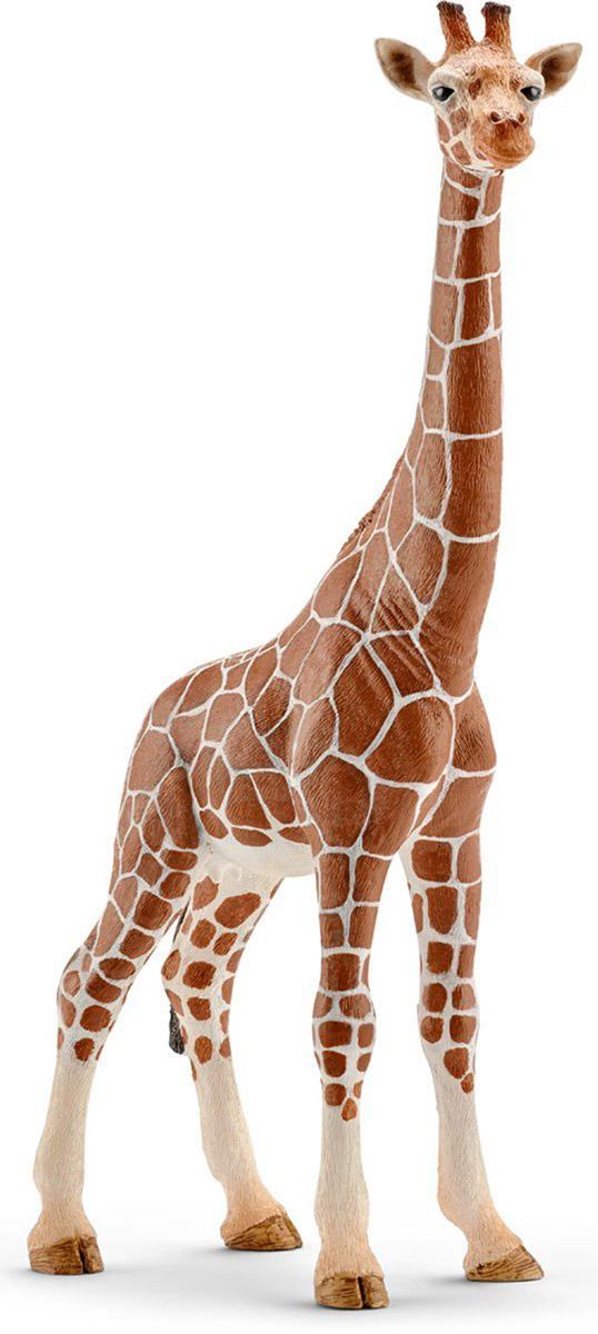 Schleich Фигурка Жираф самка14750Жираф - самое высокое в мире животное. Питается листьями деревьев и именно поэтому имеет такую длинную шею. Тело окрашено в пятнистый рисунок. На голове имеются симпатичные рожки. В настоящее время жирафа можно встретить на востоке Африки. Жираф исключительно травоядное животное и питается листвой с деревьев, где у него нет конкурентов. Тело покрыто шерстью желтого цвета с коричневыми пятнами на ней, что позволяет маскироваться от хищников. Жираф с длинной шеей и характерной окраской - яркий представитель африканской саваны. Его мощная шея способна выдерживать большие нагрузки и позволяет дотянуться до самых высоких веточек с вкусными листочками. Фигурка раскрашивалась вручную с особой внимательностью к каждой детали. Изготовление игрушек находится под контролем Берлинского зоопарка, поэтому игрушки так похожи на настоящих животных.Фигурка Schleich Жираф является отличным обучающим материалом и знакомит детей с представителями животного мира. Рекомендуем!