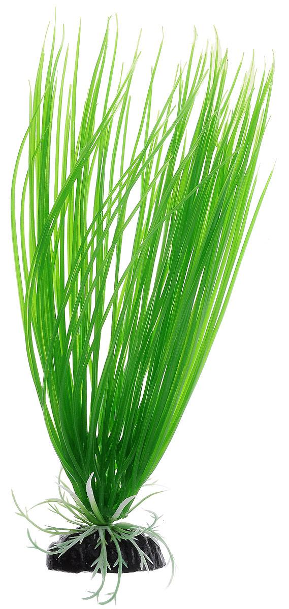 Растение для аквариума Barbus Акорус, пластиковое, высота 30 см