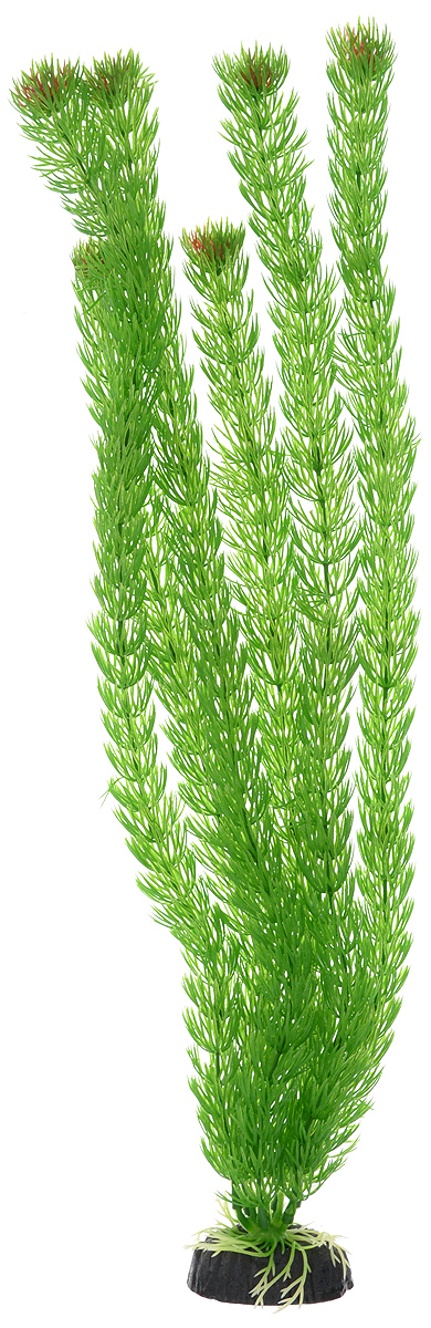 Растение для аквариума Barbus Амбулия, пластиковое, высота 50 смPlant 002/50Растение для аквариума Barbus Амбулия, выполненное из качественного пластика, станет прекрасным украшением вашего аквариума. Пластиковое растение идеально подходит для дизайна всех видов аквариумов. Оно абсолютно безопасно, нейтрально к водному балансу, устойчиво к истиранию краски, подходит как для пресноводного, так и для морского аквариума. Растение для аквариума Barbus поможет вам смоделировать потрясающий пейзаж на дне вашего аквариума или террариума. Высота растения: 50 см.