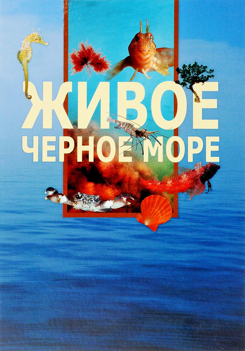 Александр Вершинин Живое Черное море веб камеры черного моря
