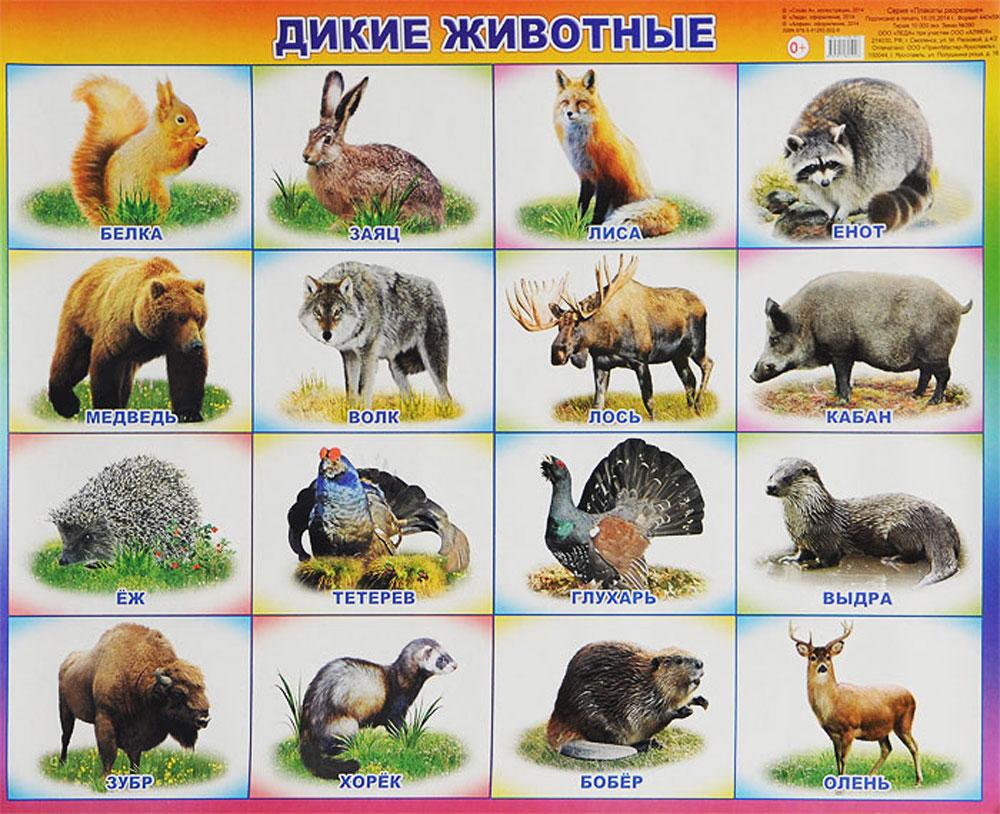 Лесные животные картинки с названиями для детей