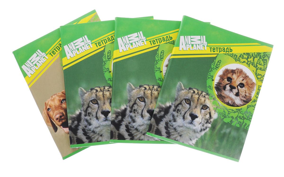 Action! Набор тетрадей Animal Planet 96 листов в клетку 4 шт канцелярский набор action animal planet 6 предметов pvc пенал