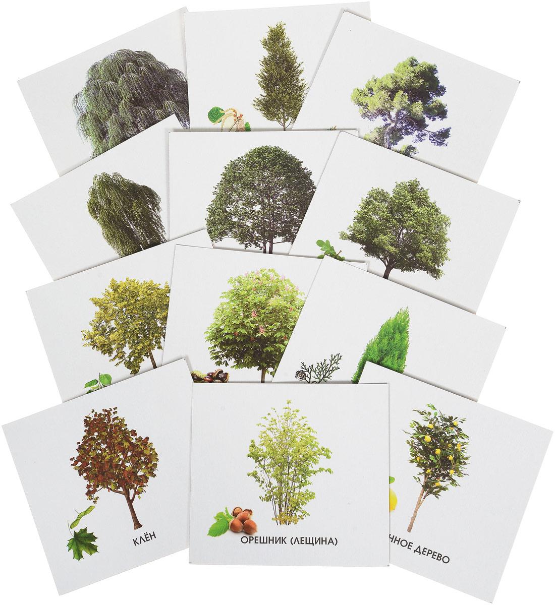 Фото - Улыбка Обучающие карточки Деревья России перелетные птицы россии обучающие карточки