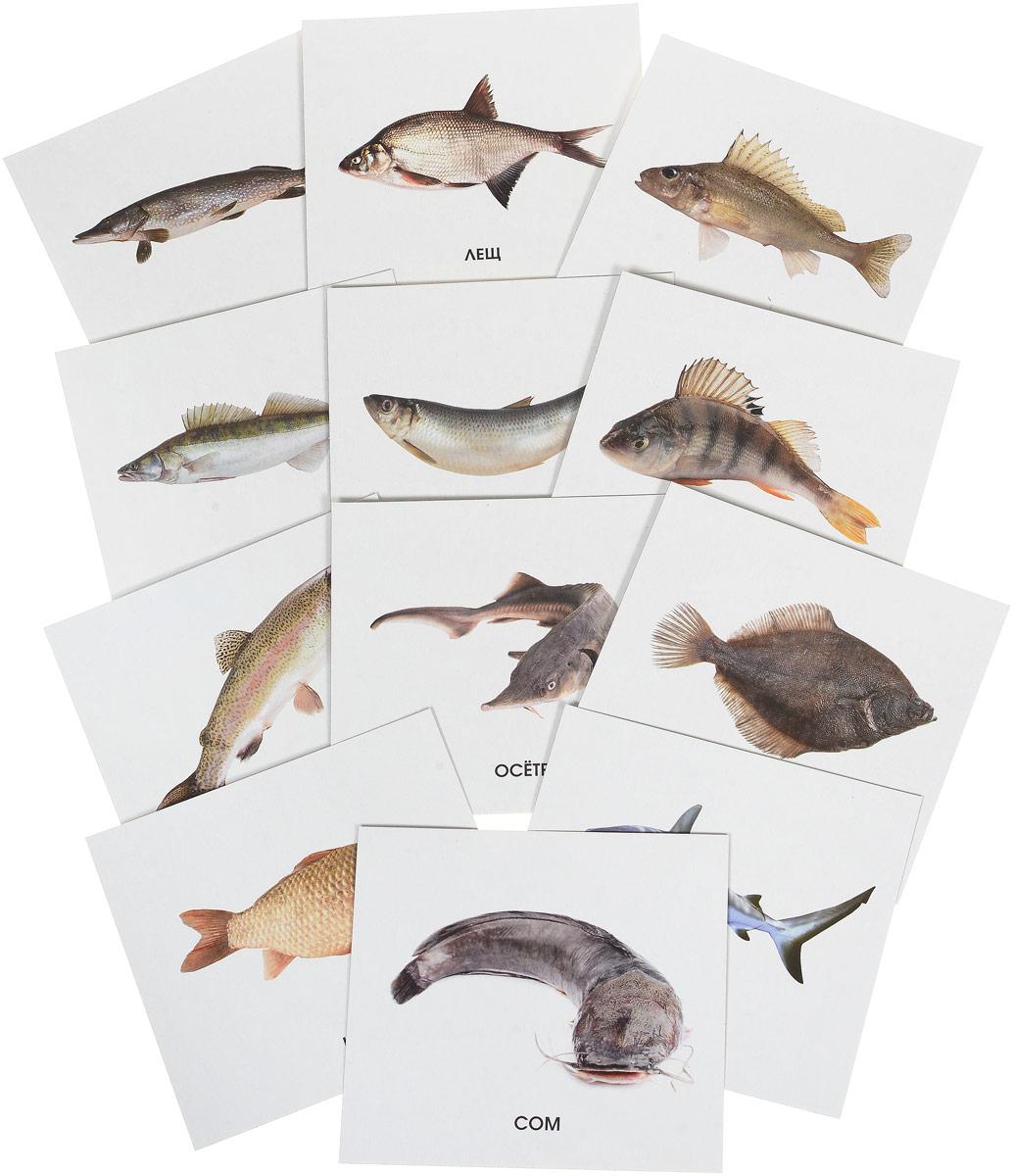 Улыбка Обучающие карточки Рыбы России рыбы серия