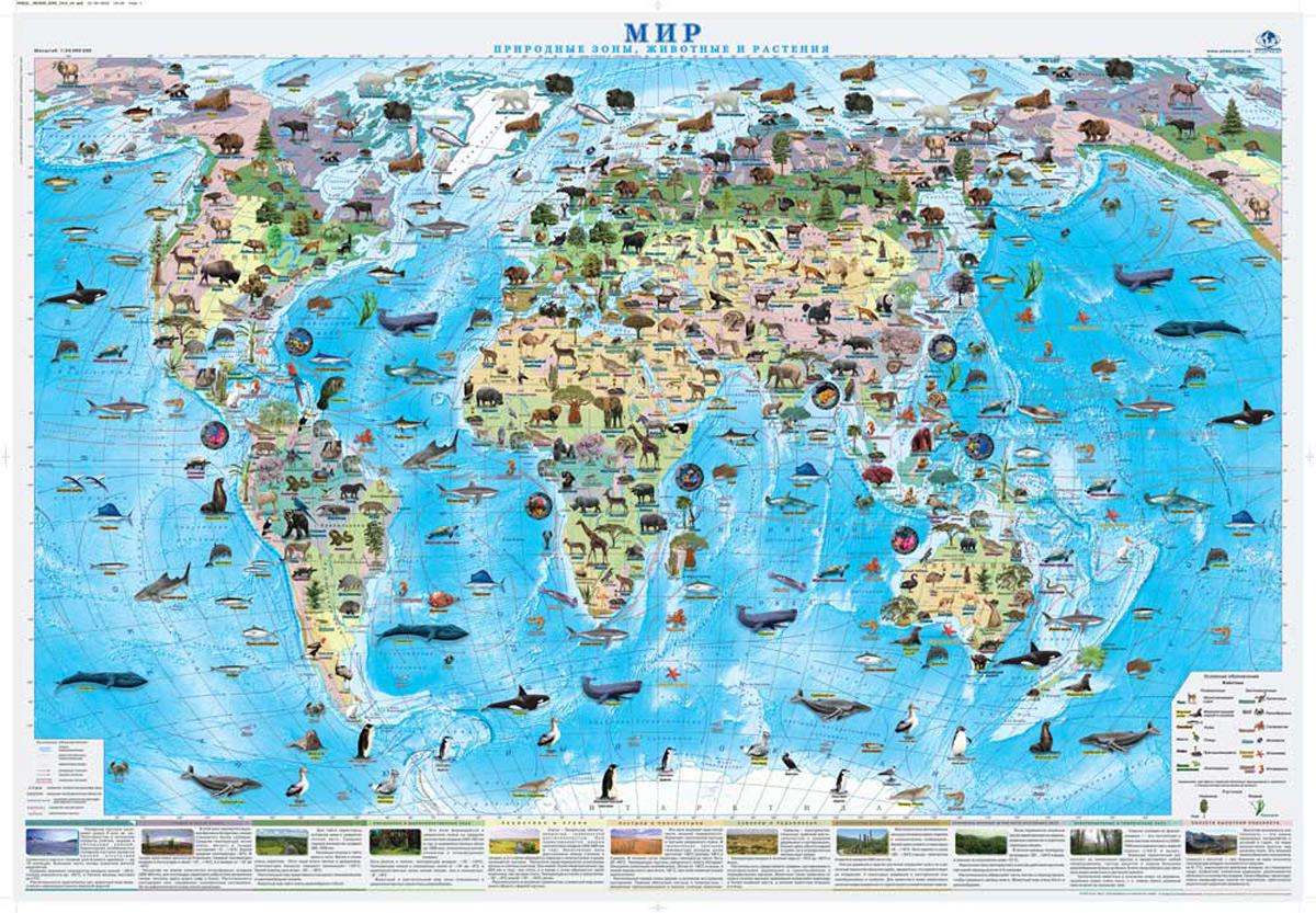 03b957c9e2887 Мир. Природные зоны. Животные и растения. Настенная карта — купить в  интернет-магазине OZON с быстрой доставкой