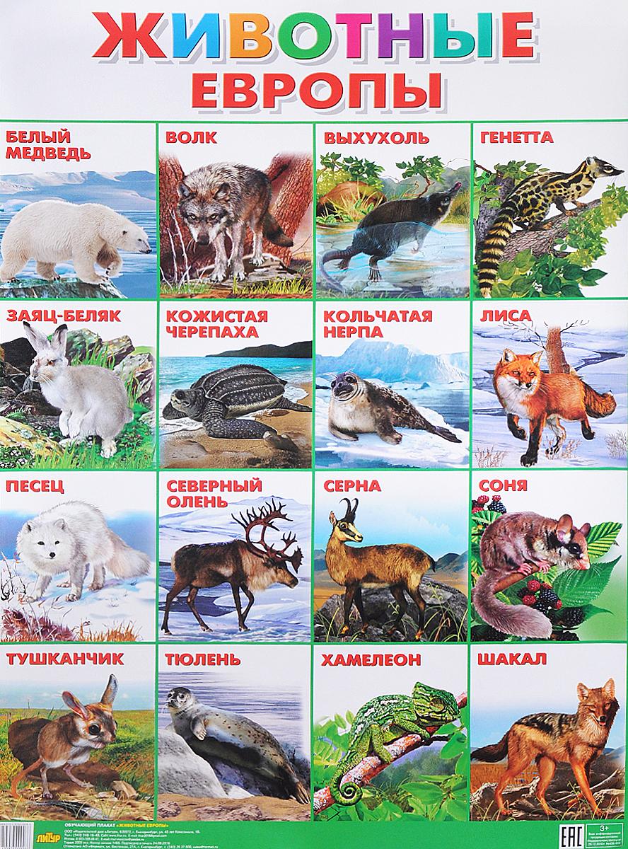 Животные Европы. Плакат обучающие плакаты мозаика синтез обучающий плакат животные средней полосы