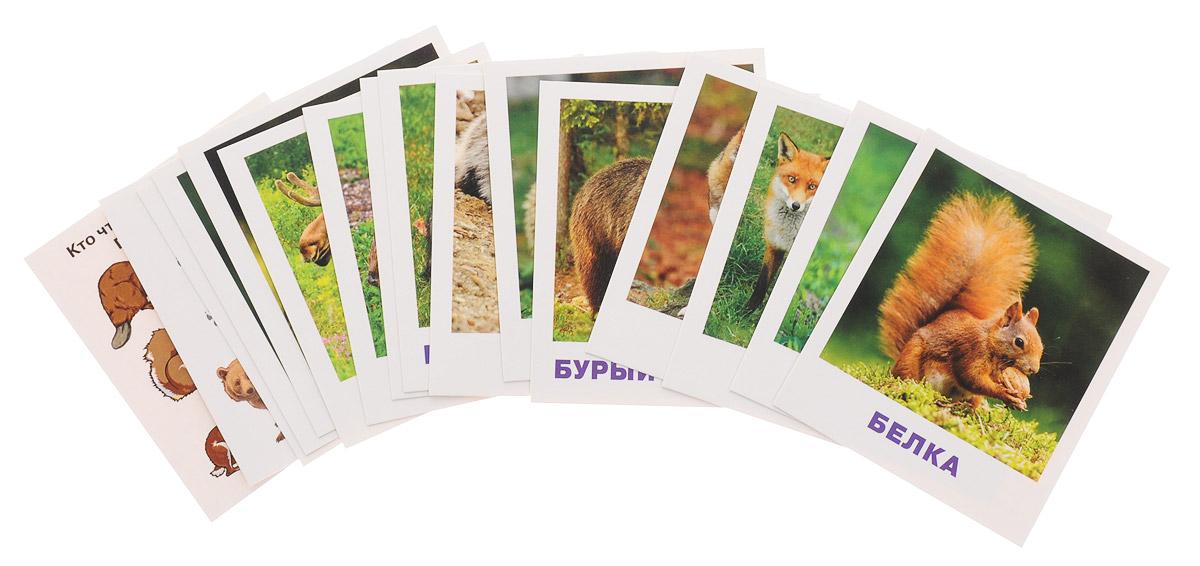 Фото - Айрис-пресс Обучающие карточки Кто живет в лесу? айрис пресс набор карточек умный малыш транспорт