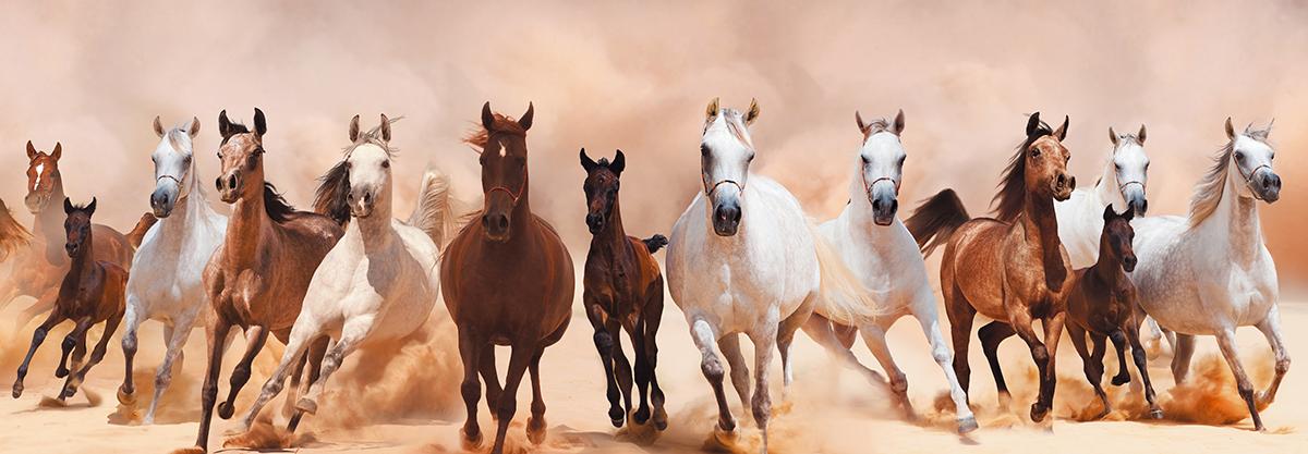 """Картина Postermarket """"Табун лошадей"""", 33 х 95 см"""