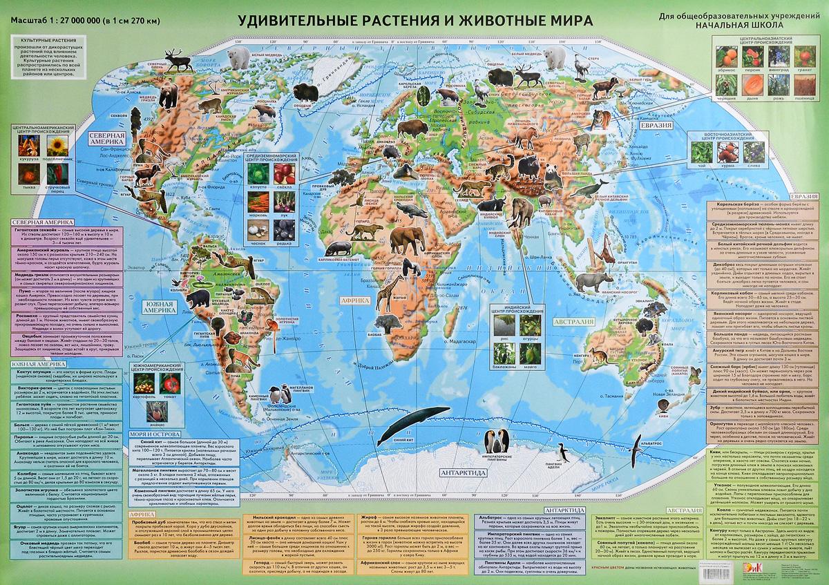 b9b73962d8994 Удивительные растения и животные мира. Настенная карта — купить в интернет-магазине  OZON с быстрой доставкой