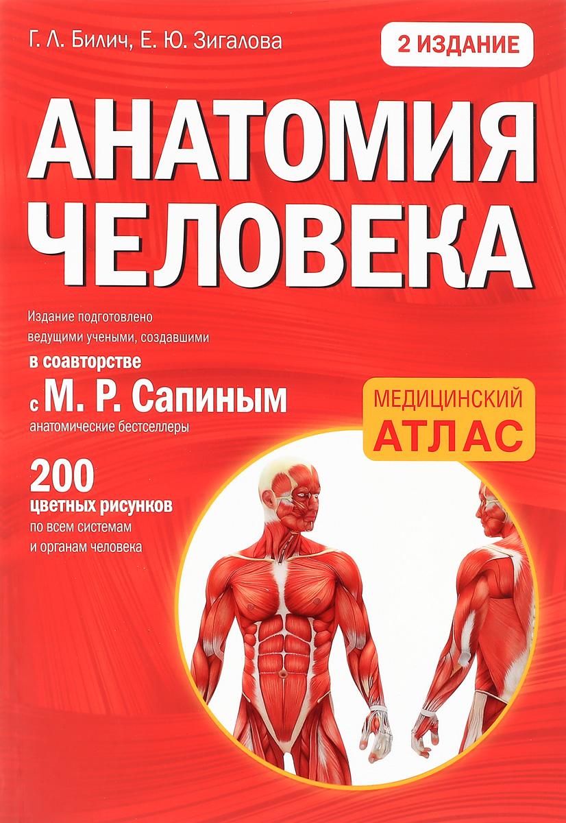 Г. Л. Билич, Е. Ю. Зигалова Анатомия человека