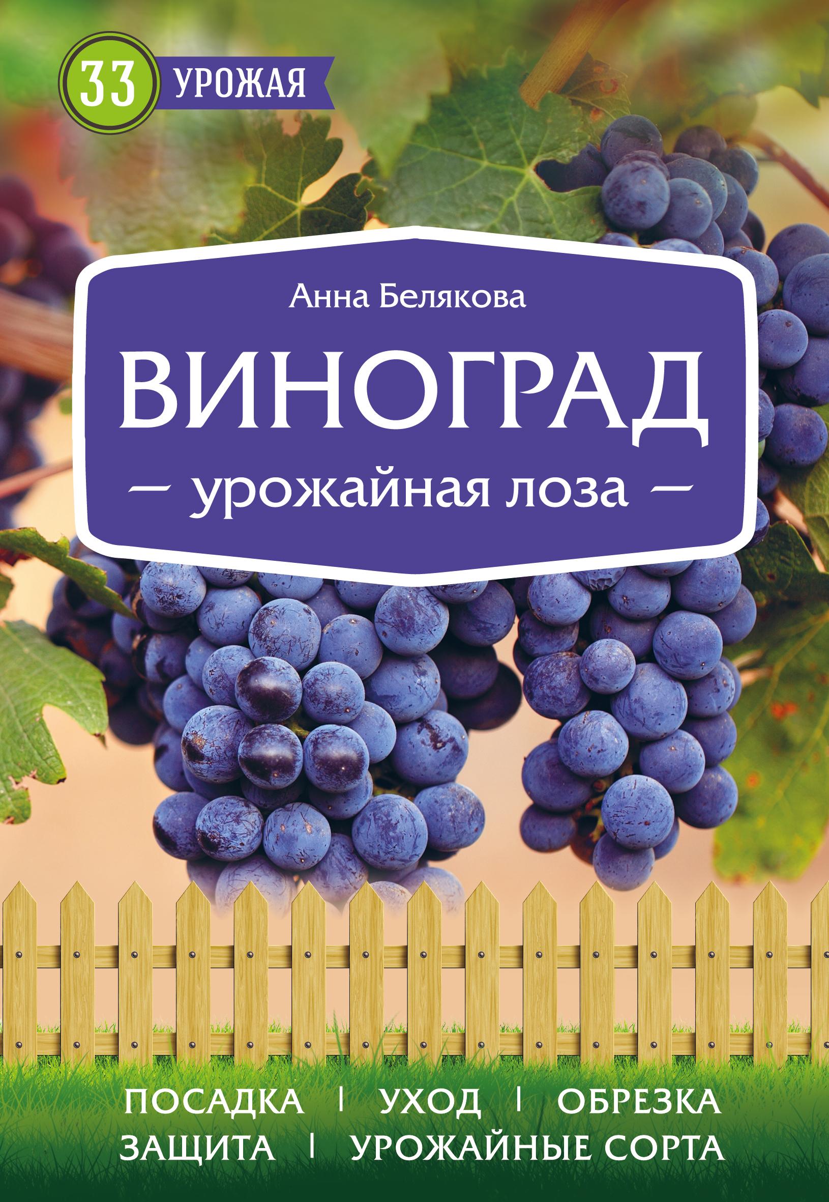 Белякова Анна Владимировна Виноград. Урожайная лоза
