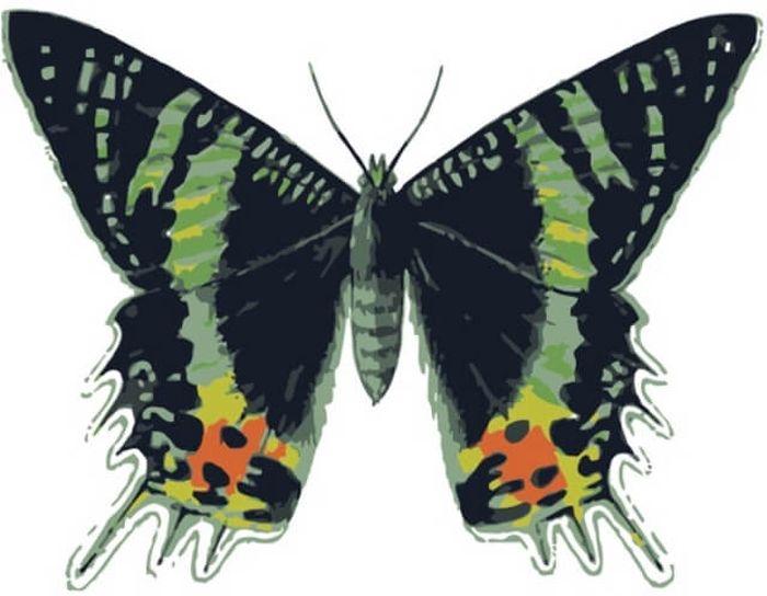 Набор для рисования по номерам Цветной Бабочка Урания мадагаскарская, 20 x 30 смMC1003Набор для рисования по номерам Цветной поможет создать красивую картину. Подходит новичкам, любителям и даже тем, кто совершенно не умеет рисовать. С помощью такого набора вы можете стать настоящим художником и создателем прекрасных картин. Вы получите истинное удовольствие от погружения в процесс творчества, а созданные своими руками картины украсят интерьер вашего дома или станут прекрасным подарком. Техника раскрашивания на холсте по номерам дает возможность легко рисовать даже сложные сюжеты. Прекрасно развивает художественный вкус, аккуратность и внимание. Каждая краска в наборе имеет свой номер, соответствующий номеру области на холсте. Нужно только аккуратно нанести необходимую краску на отмеченный для нее участок. Таким образом, шаг за шагом у вас получится великолепная картина. В набор входит: - хлопковый холст, натянутый на деревянный подрамник;- акриловые краски; - кисти для рисования; - крепежные петли для подвешивания картины; - контрольная схема рисунка; - трафарет с цифрами; - инструкция.