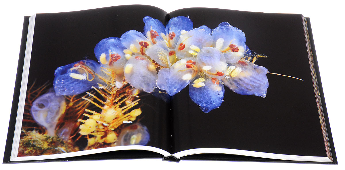 Книга The Magical World of the Cold Seas. Alexander Semenov