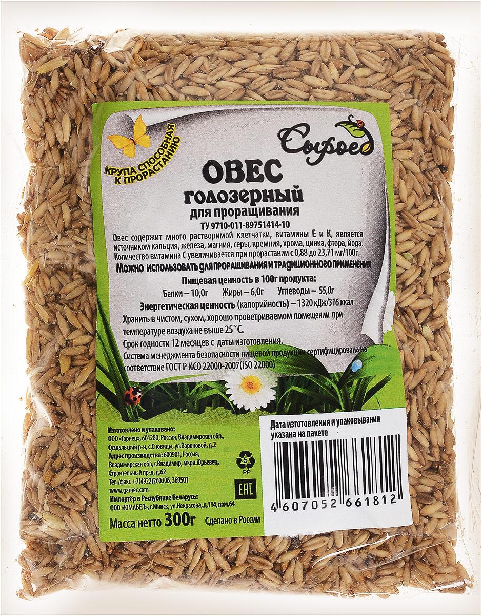 Гарнец Зерна для проращивания Овес голозерный, 300 г