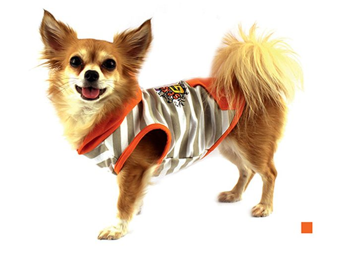 "Майка для собак Каскад ""Sexy Girl"", для девочки, цвет: оранжевый, бежевый. Размер M"