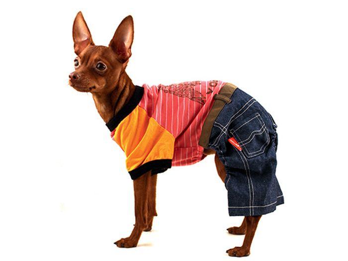 """Комбинезон для собак """"Каскад"""", унисекс, цвет: коралловый, оранжевый, синий. Размер L"""
