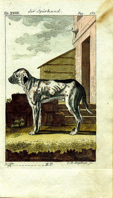собака ищейка бигль резцовая гравюра акварельная раскраска германия берлин 1788 год купить в интернет магазине Ozon с быстрой доставкой