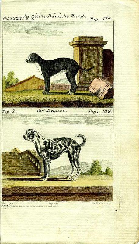 Малая датская собака. Датский дог. Резцовая гравюра, акварельная раскраска. Германия, Берлин, 1788 год printio германия берлин
