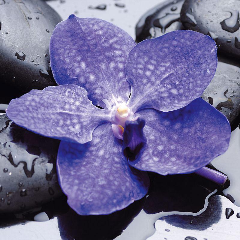 Картина на стекле Postermarket Синий цветок, 30 х 30 см цена