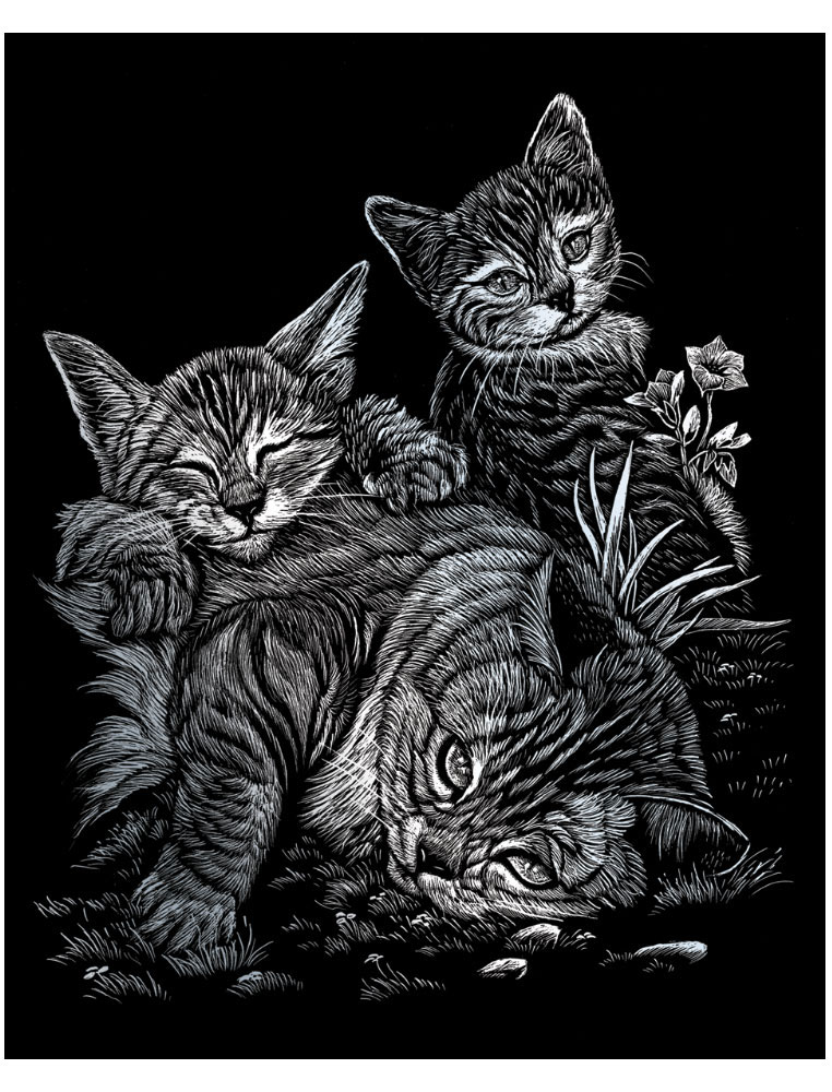 том, коты в черно белом цвете картины приготовить