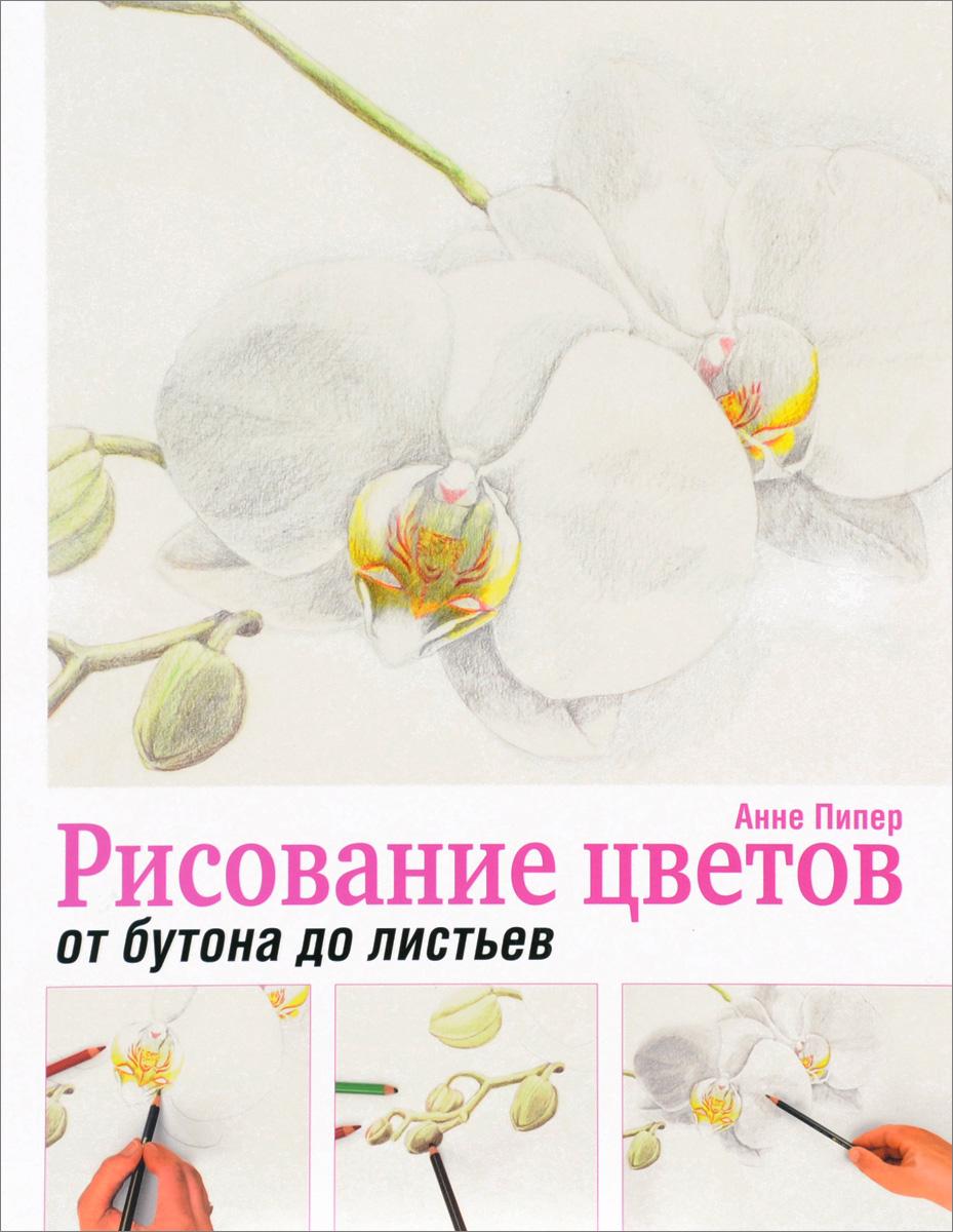 Анне Пипер Рисование цветов от бутона до листьев