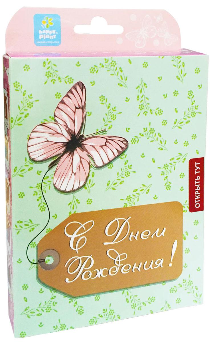 Happy Plant Набор для выращивания С днем рождения Бабочка набор подарочный для выращивания happy plants с днем рождения совенок