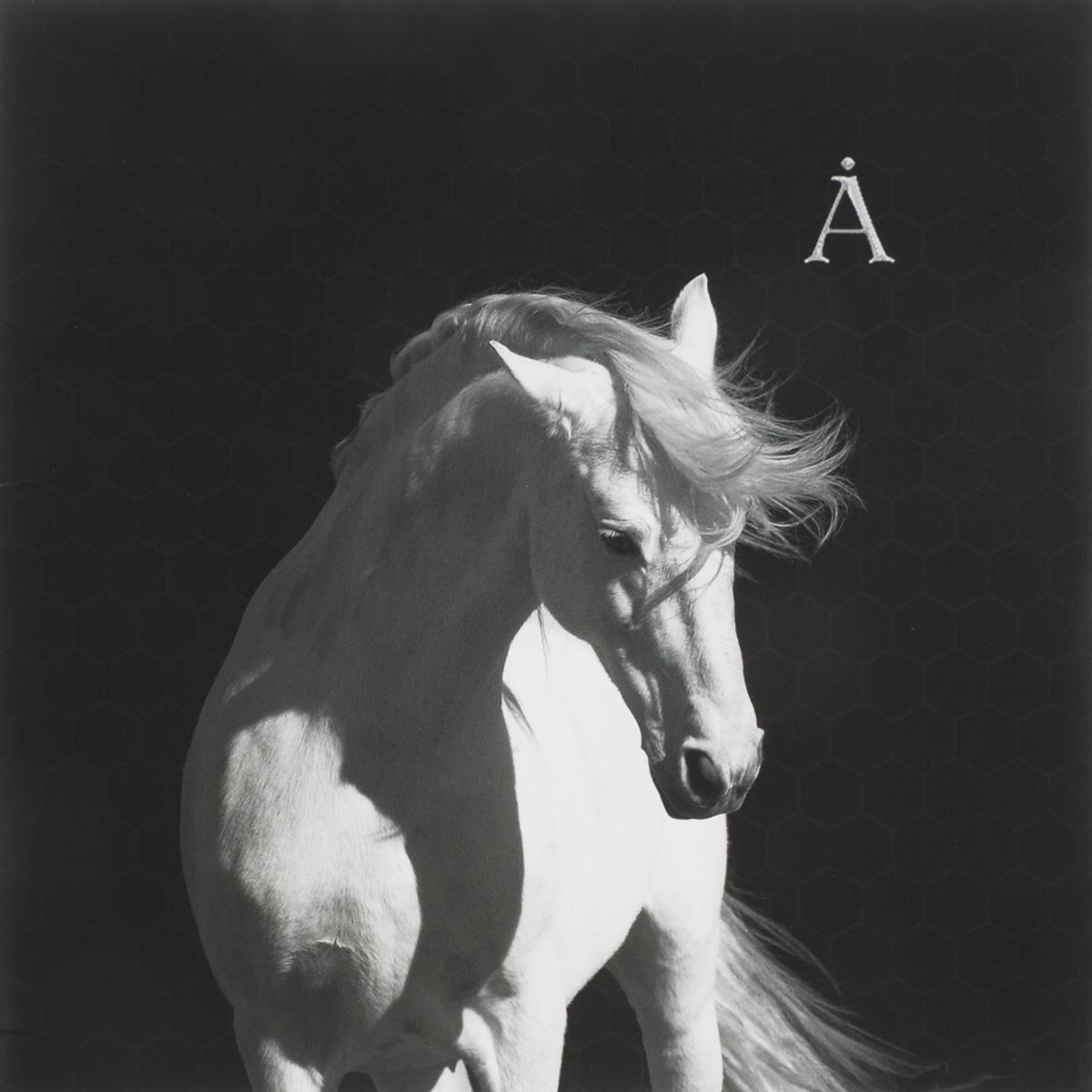 Аквариум Аквариум. Лошадь Белая (LP)