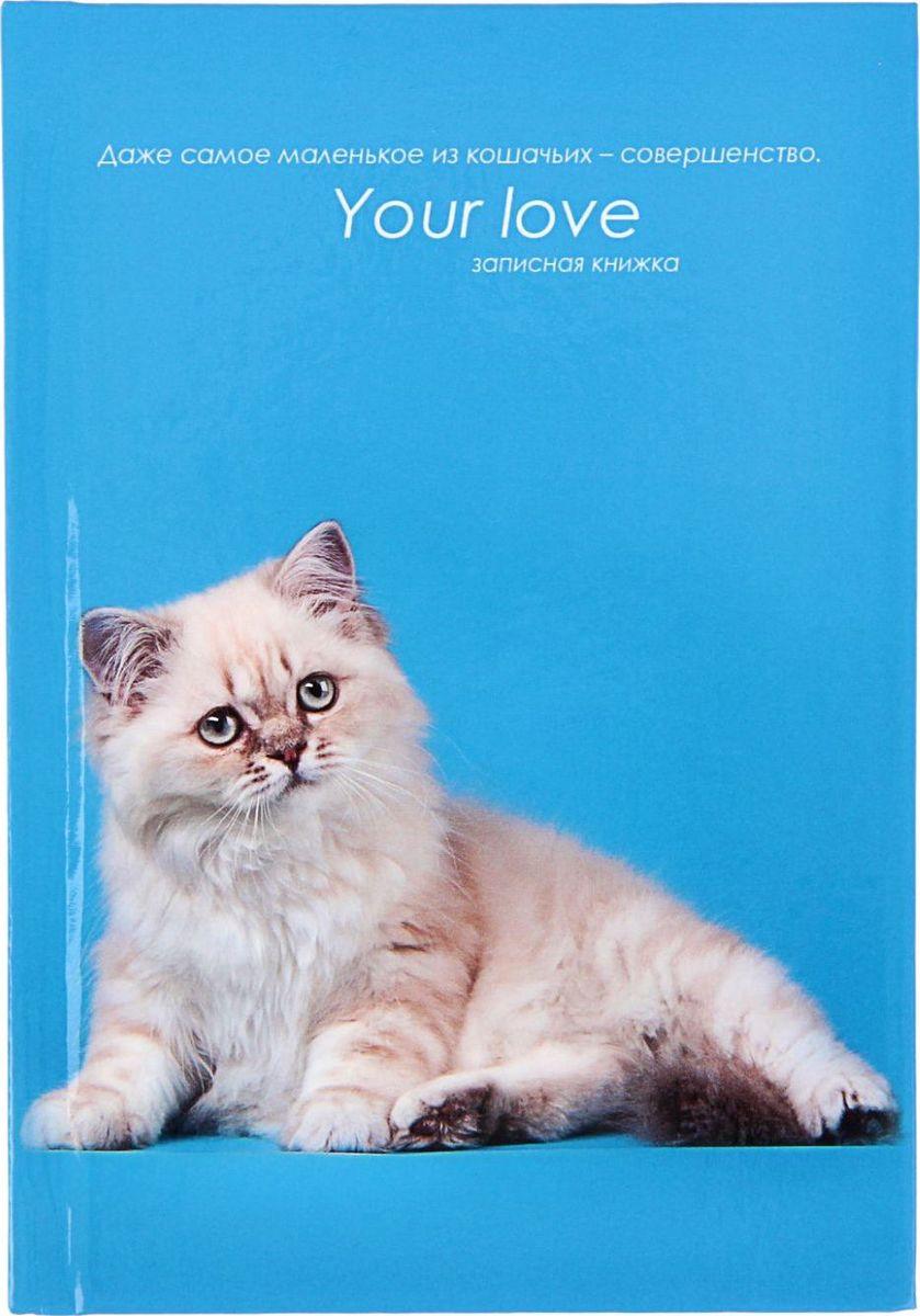 Проф-Пресс Записная книжка Белая кошка на голубом 48 листов цена 2017