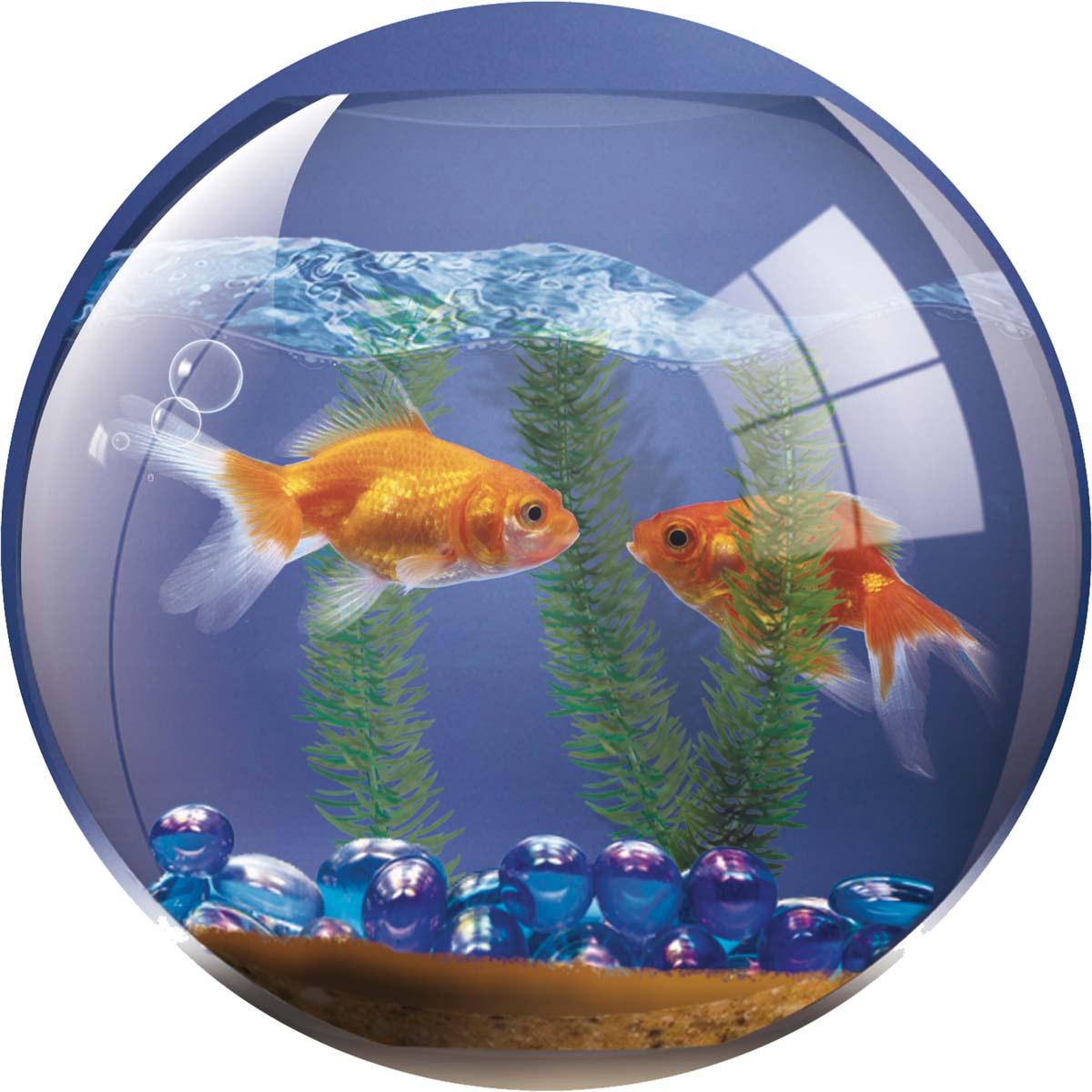 Картинки с рыбками в аквариум