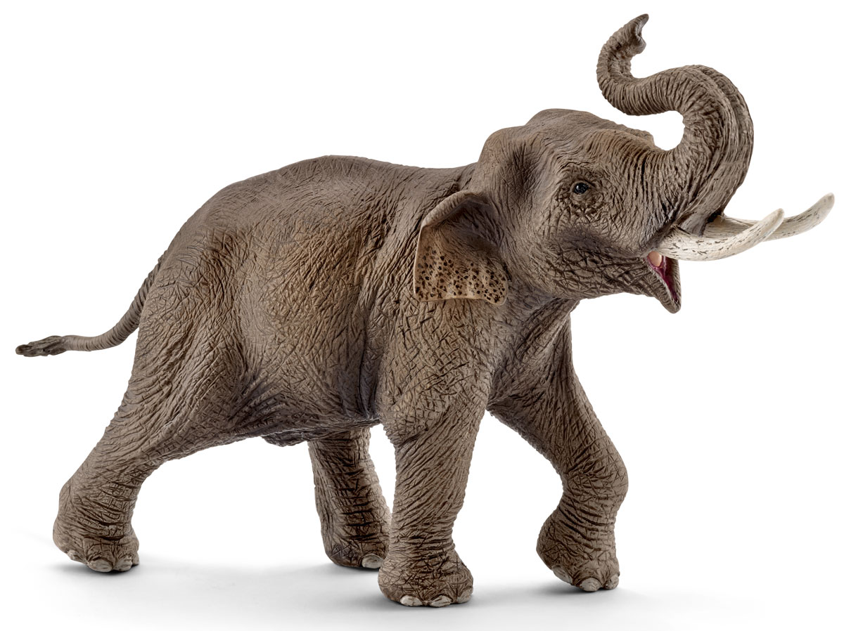 Schleich Фигурка Азиатский слон самец schleich фигурка горилла самец 14770