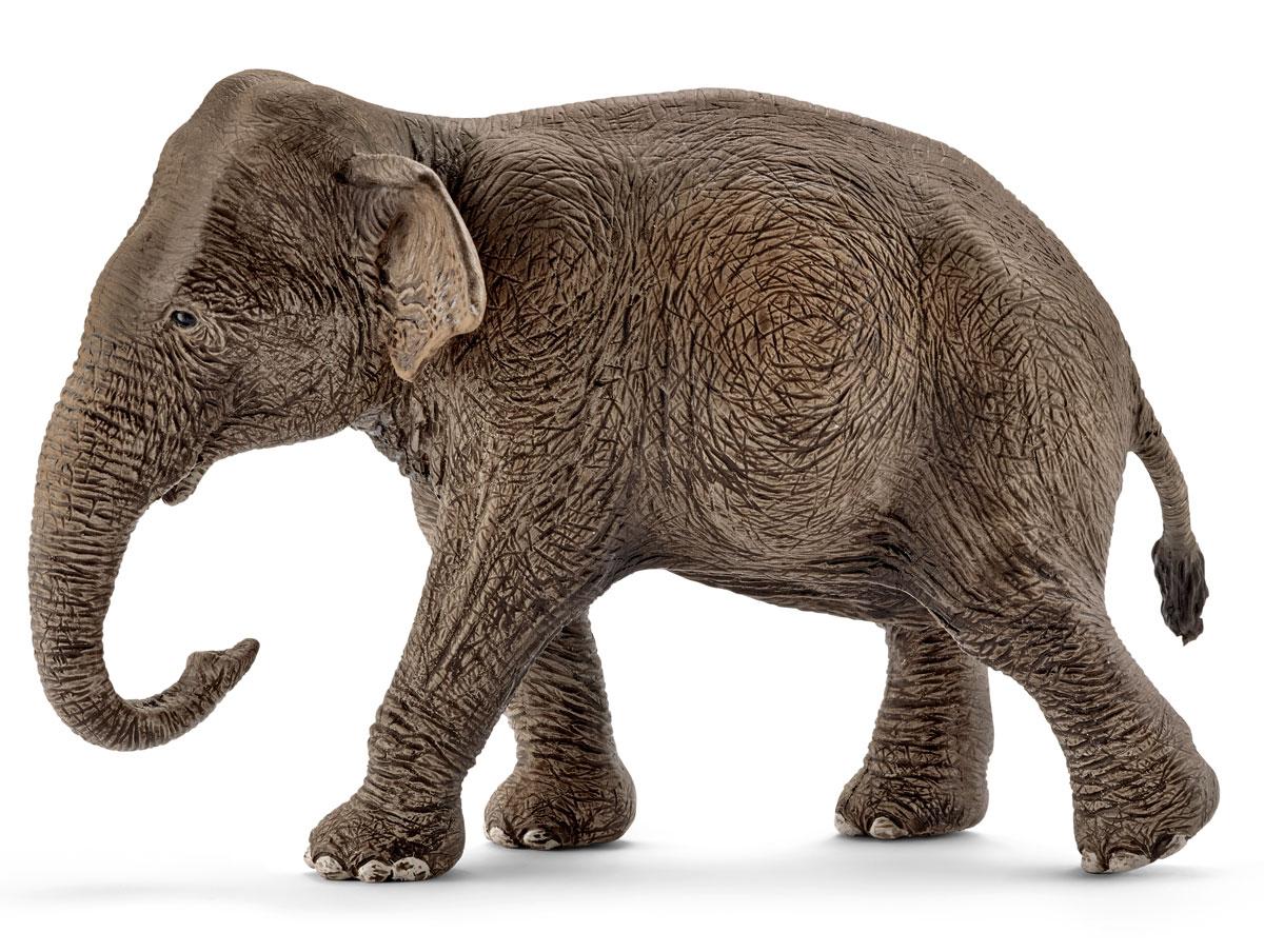 Schleich Фигурка Азиатский слон самка цена