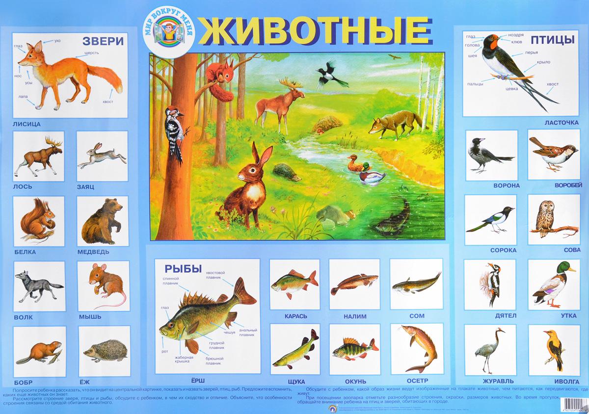 Л. Данилова Животные. Плакат