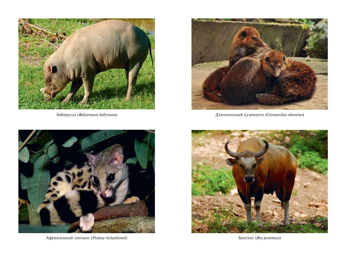 отдельно самые редкие животные фото и описание того, каждый вечер