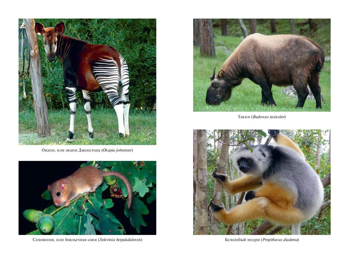 тут самые редкие животные фото и описание настолько нежные