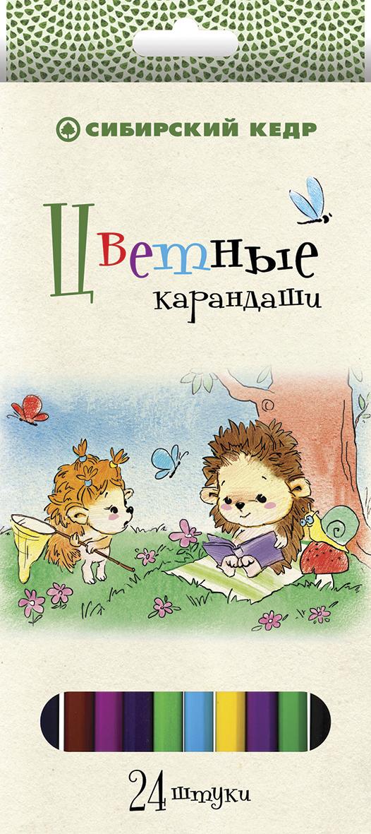 СКФ Набор цветных карандашей Сибирский кедр Ежик 24 шт карандаши цветные сибирский кедр веселые карандаши 12 цветов в блистере ск039 12