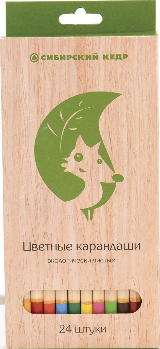 СКФ Набор цветных карандашей Сибирский кедр Eco 24 шт карандаши цветные сибирский кедр веселые карандаши 12 цветов в блистере ск039 12
