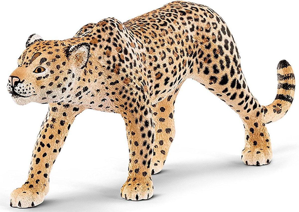 Schleich Фигурка Леопард 1474814748Леопард относится к подсемейству больших кошек. Является хищным млекопитающим. Леопард крупная кошка, но уступает в размерах тигру и льву. Самцы на треть крупнее самок, их вес может достигать до 75 кг. Леопард является одиночным зверем. Наибольшую активность проявляет в ночное время. Хоть леопард и не крупная кошка, но он может охотиться на добычу, которая вест около 900 килограмм.Фигурка леопарда от компании Schleich порадует всех любителей животных и коллекционеров реалистичных фигурок животных. У леопарда кольцевые черные пятна со светлой серединой, похожие на пятна ягуара. Однако у ягуара пятна имеют маленькую белую точку в середине. Леопарды, а также тигры и ягуары, одни из немногих больших кошек, которые любят плавать. Леопард очень быстро бегает и может прыгать до шести метров в длину и на три метра в высоту. Лишь в редких случаях жертве удается убежать от этого умелого охотника. Леопард даже следует за жертвой в воду или на деревья, потому что хорошо плавает и прекрасно лазает по деревьям. Он может легко подняться на высокие деревья до 15 метров высотой, даже держа в пасти добычу, которая больше и тяжелее, чем сам леопард. Ни одна другая большая кошка не может подняться так высоко, поэтому леопард чувствует себя в безопасности от других хищников на деревьях. Леопард проводит много времени на деревьях, он там спит и высматривает оттуда свою жертву.Игрушки Schleich познакомят вашего ребенка с представителями дикой природы. Все фигурки прекрасно сочетаются с другими ... Рекомендуем!