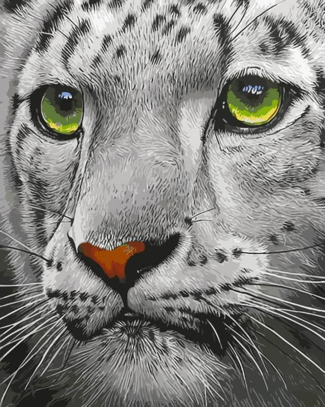 Набор для рисования по номерам Цветной Белый тигр, 30 х 40 см