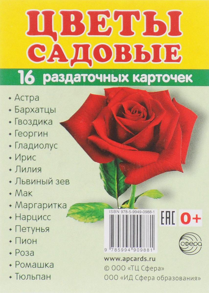 Цветы садовые (набор из 16 карточек) одежда набор из 16 карточек