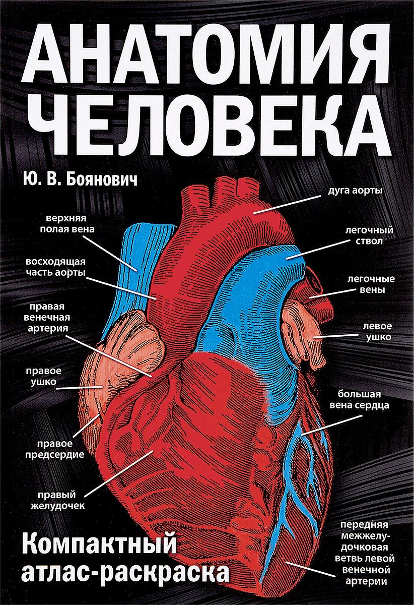 Ю. В. Боянович Анатомия человека. Компактный атлас-раскраска