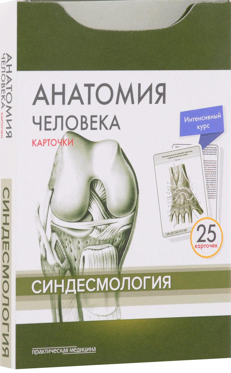 М. Р. Сапин, В. Н. Николенко, М. О. Тимофеева Анатомия человека. Синдесмология (набор из 25 карточек) сапин м николенко в тимофеева м анатомия человека иммунная лимфатическая и эндокринная система 32 карточки