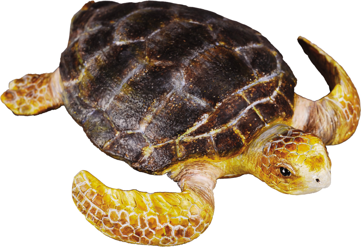 Открытки февраля, картинки с черепахами для детей