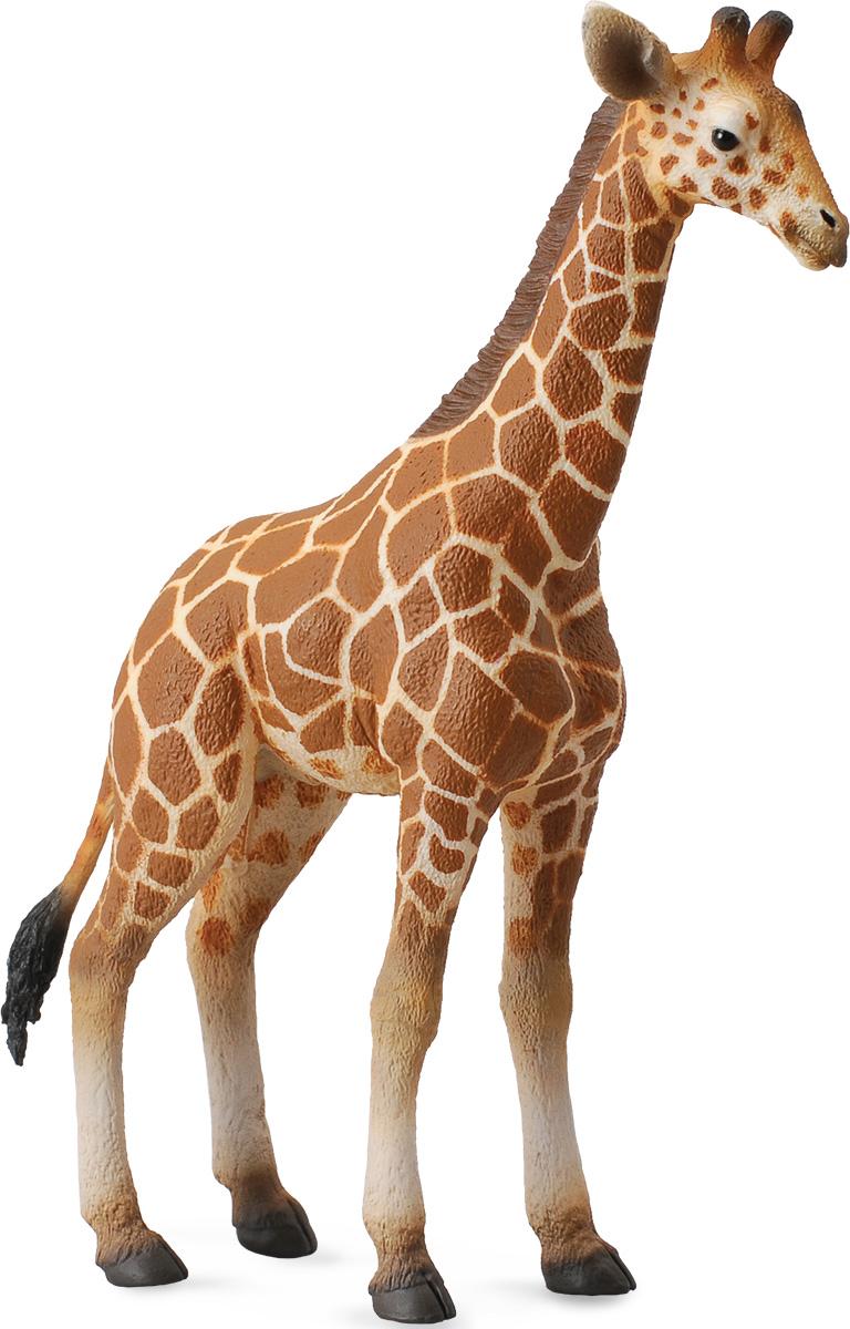 Жираф на белом фоне картинки для детей