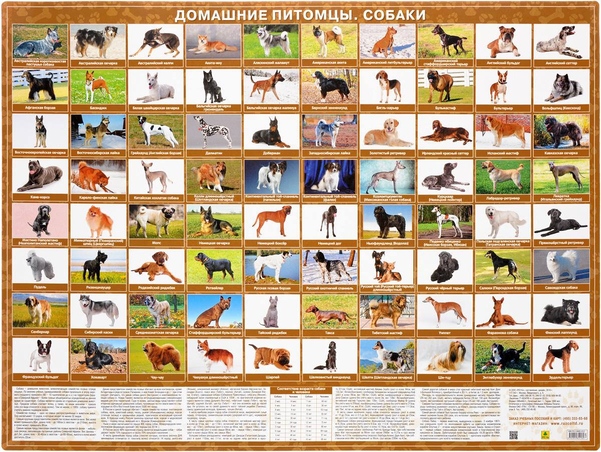Домашние питомцы. Собаки домашние питомцы 11 плакаты 50 х 70