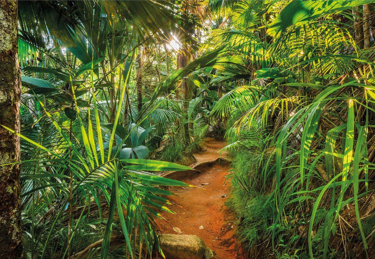 Фотообои Komar Тропинка в джунглях, 368 см х 2,54 м цена