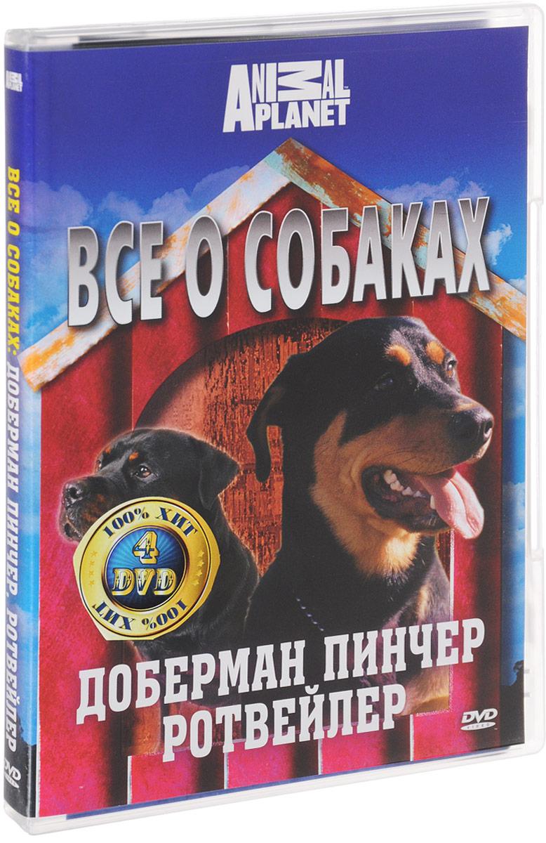 Discovery: Все о собаках. Часть 1 (4 DVD) малышам о малышах часть 1 4 dvd