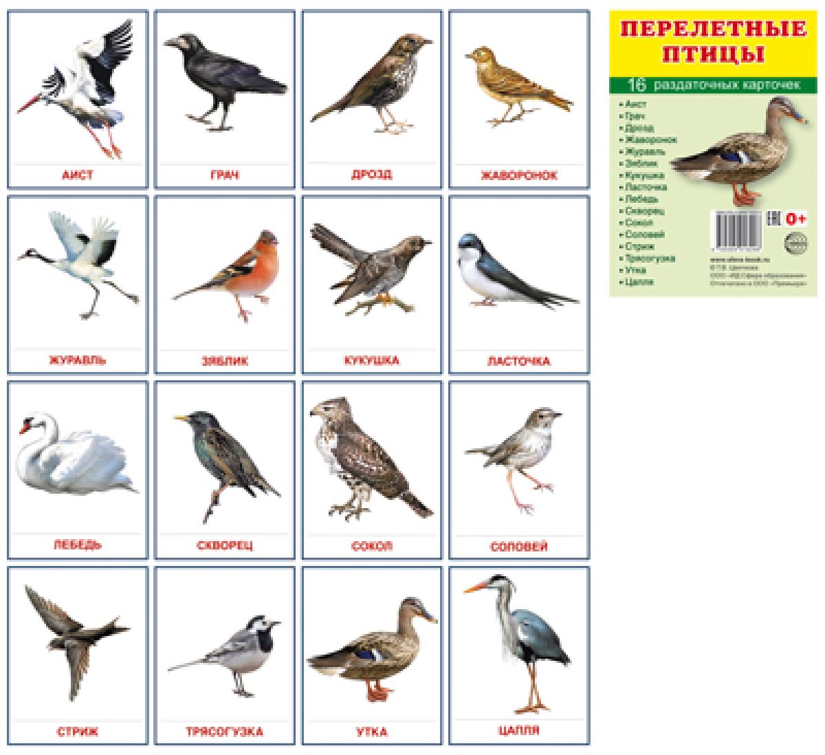 все птицы по алфавиту толкование зависит выраженности