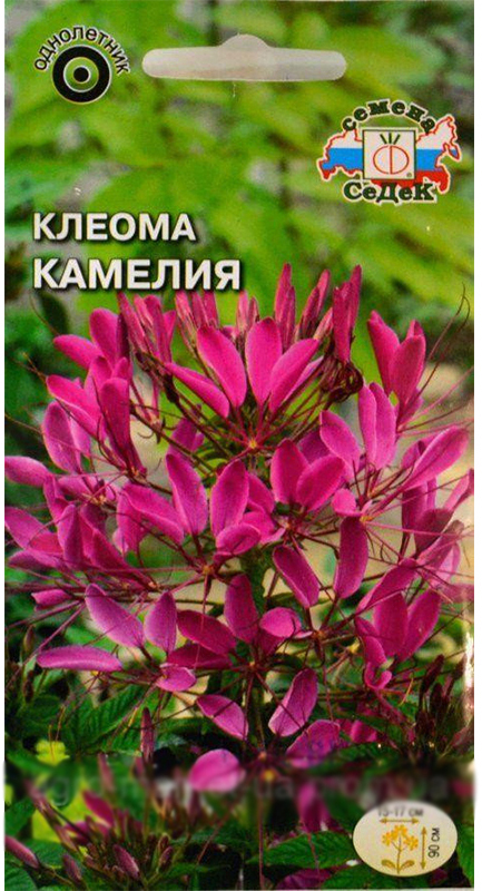 """Семена Седек """"Клеома. Камелия"""", 0,2 г"""