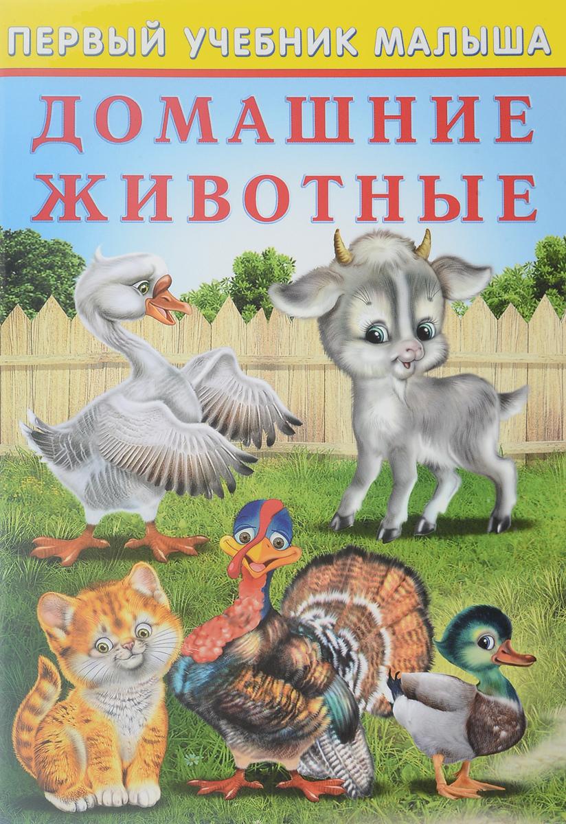 Ю. Зверькова Домашние животные